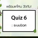 Quiz 6 : ระบบนิเวศ